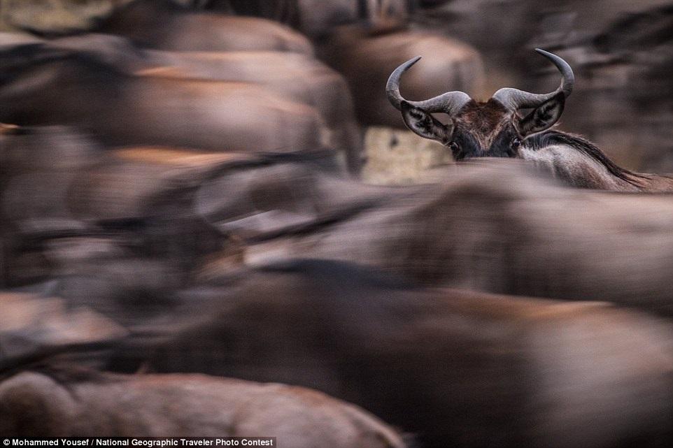 Фото сделано в заповеднике Масаи-Мара