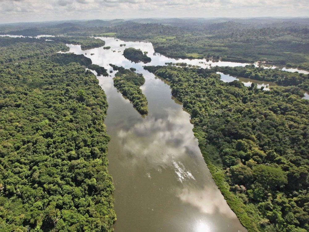 Леса Амазонии Бразилия