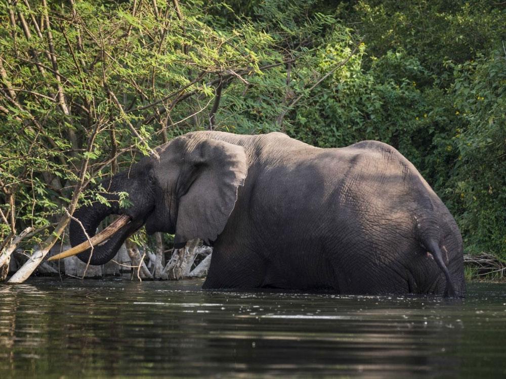 Бассейн реки Конго